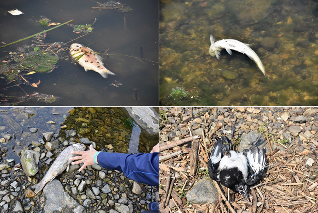 ▲ 4대강 사업 후 물고기가 죽어나가는 물이 된 낙동강. ⓒ대구환경연합(정수근)