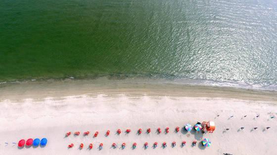 20일 부산 사하구 다대포해수욕장에 녹조가 발생해 피서객 입욕이 통제되고 있다. [연합뉴스]