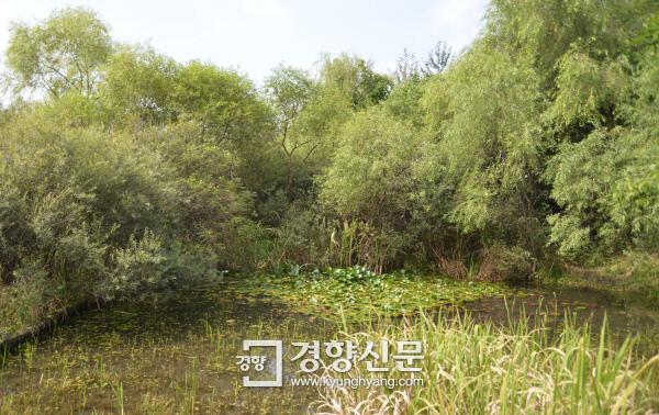 하루 탐방 인원을 300명으로 제한해 자연 모습을 잘 간직하고 있는 서울 강동구 길동생태공원 내 습지. 한국도로공사의 서울세종고속도로 서울구간 터널이 이 공원 지하를 지나도록 계획되면서 훼손논란이 일고 있다.