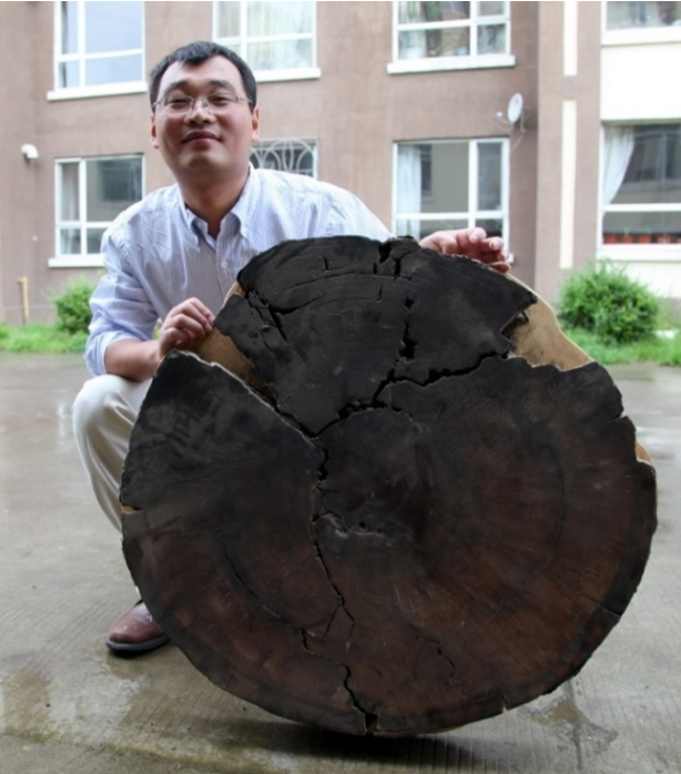 중국 화산학자가 백두산 화산 인근에서 채집한 낙엽송을 들어 보이고 있다. 영국 케임브리지대 클라이브 오펜하이머 교수 연구팀은 이 나무의 연대를 측정해 백두산 대분화가 946년 가을에 일어난 것으로 추정했다. 오펜하이머 교수 제공