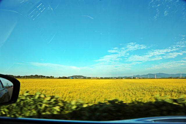 지금, 김제에서 차를 타고 가다 보면 흔히 보이는 풍경이다. 사진=조두현 기자