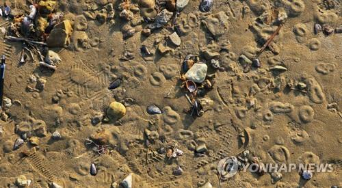 '지진 영향?' (포항=연합뉴스) 한국지질자원연구원이 11·15 포항 지진(규모 5.4) 진앙 인근에서 발견한 '샌드 볼케이노'(화산 모양의 모래 분출구). 지진 흔들림으로 땅 아래 있던 흙탕물 등이 지표면 밖으로 솟아오른 '액상화 현상' 가능성이 있다고 지질연은 19일 설명했다. 기상청은 이날부터 관련 사안을 확인하고자 조사하기로 했다. 2017.11.19 [한국지질자원연구원 제공=연합뉴스]       walden@yna.co.kr
