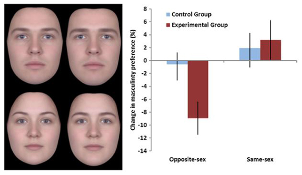 왼쪽 사진 4장 중 위 2장은 남성, 아래 2장은 여성이다. 각각 왼쪽은 여성적인 얼굴, 오른쪽은 남성적인 얼굴로 합성됐다. 오른쪽 그래프의 경우 파란색은 피임약을 복용하지 않은 그룹, 갈색은 피임약을 복용한 그룹이다. 피임약을 복용한 그룹에서 남성적인 얼굴을 선호하는 비율이 매우 낮아진 것을 알 수 있다./그래프=Psychoneuroendocrinology(정신신경내분비학) 저널