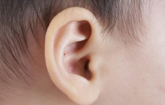 유아의 귀