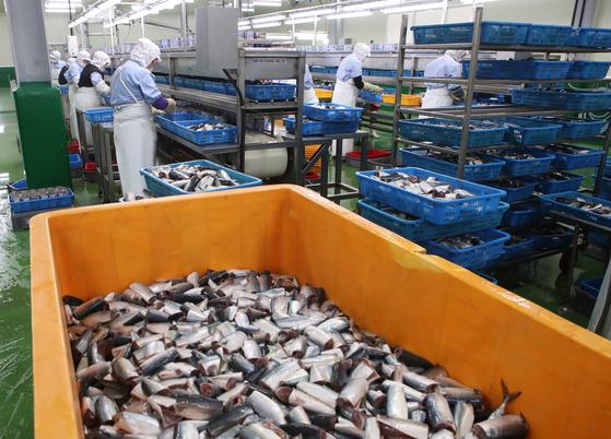 굴통조림 비수기에는 대기업에서 주문 받은 고등어통조림 등을 생산해 직원들의 월급을 주고 있다.송봉근 기자