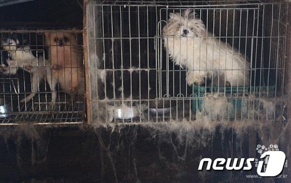 불법 개 번식장에 사는 개들.(사진 동물자유연대 제공)© News1