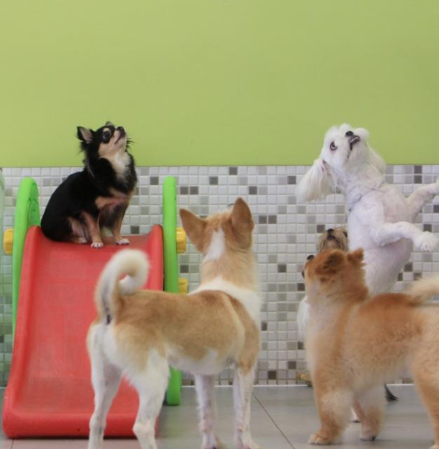 어릴 때 다른 개들과 지낸 개들이 나중에 다른 개들과 만났을 때 더 행복하다. 박미향 기자