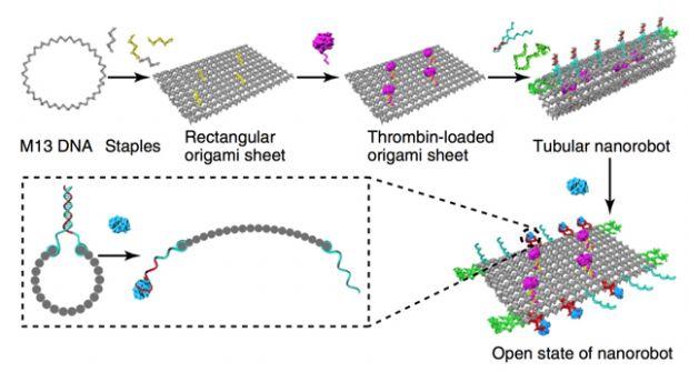 DNA 나노로봇 운반 원리(사진=중국과학원)