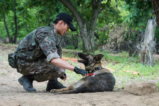 개가 마약 탐지견이나 군견으로 활약할 수 있는 것은 후각·청각이 사람보다 훨씬 뛰어나기 때문이다. [중앙포토]