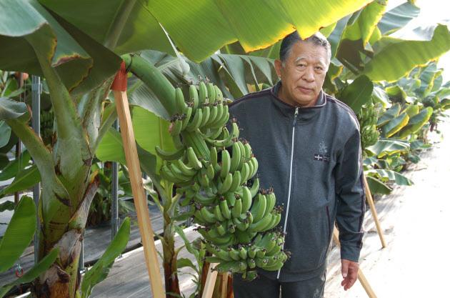 '동결 해동 각성법'이라는 독특한 바나나 재배법을 개발한 다나카 세쓰조. 재단법인 아스코
