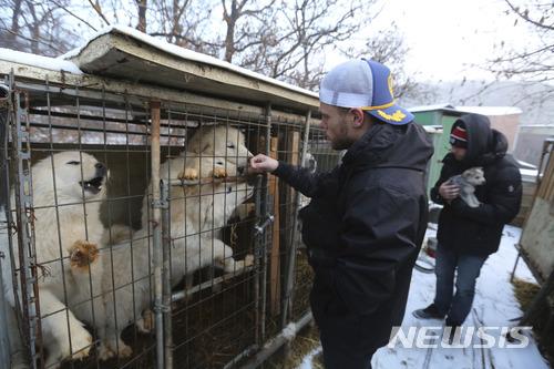 【AP/뉴시스】 미국 프리스타일 스키선수 거스 켄워시(왼쪽)가 지난 23일 경기도 시흥에 있는 한 개농장을 방문해서 둘러보고 있다. 켄워시는 강아지 한마리를 입양해 미국으로 돌아갔다. 2018.02.26.