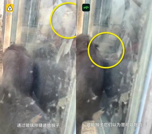 원숭이에게 담배를 건네는 남성(노란 동그라미). 중국 리스핀 영상 캡처.