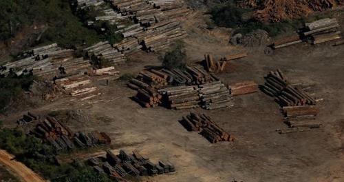 아마존 열대우림에서 이루어지는 불법벌목 현장 [브라질 뉴스포털 UOL]