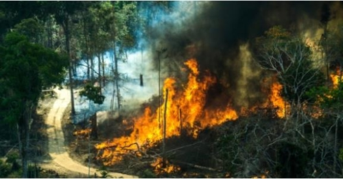 불타는 아마존 아마존 열대우림 파괴는 불법벌목과 광산 개발이 주요인으로 꼽힌다. [브라질 뉴스포털 UOL]