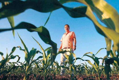 올해 브라질의 농업소득이 사상 최대치를 기록할 것으로 전망됐다. [브라질 일간지 에스타두 지 상파울루]