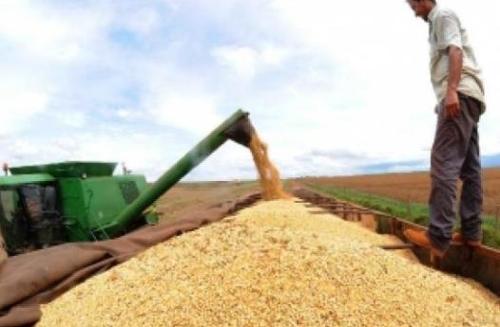 브라질의 대두 수확 장면 [국영 뉴스통신 아젠시아 브라질]