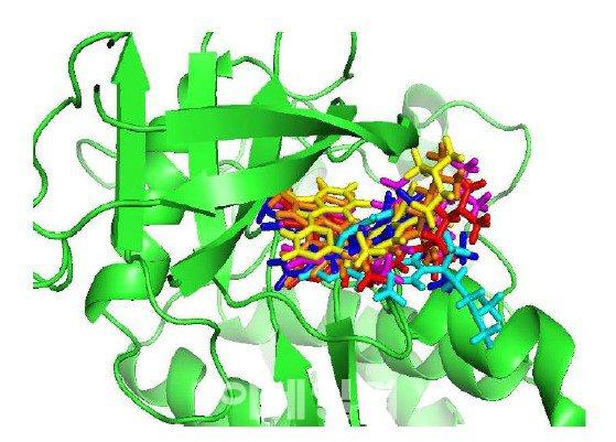 인공지능을 활용하면 단백질 구조에 일치하는 후보물질을 찾아낼 수 있다.(사진=신테카바이오 제공)