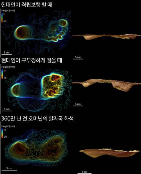 현대인의 발자국과 360만 년 전 호미닌의 발자국에 나타난 압력 분포(왼쪽)와 발을 디딜 때의 발바닥 형태를 3차원(3D)으로 복원한 모습(오른쪽). 호미닌이 걸을 때 발의 힘 분포와 형태는 현대인이 직립보행 할 때와 더 유사한 것을 알 수 있다. - 자료: 미국 애리조나대