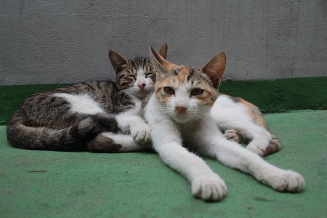 추울 때도 더울 때도, 서로에게 의지하며 생을 버텨내던 두 마리 고양이가 어느날 연기처럼 사라졌다.