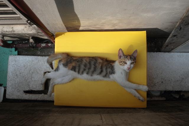 공사장 옆에 마련된 '길고양이집' 위에서 쉬고 있는 고양이. 아직 아기 티를 벗지 못했다.