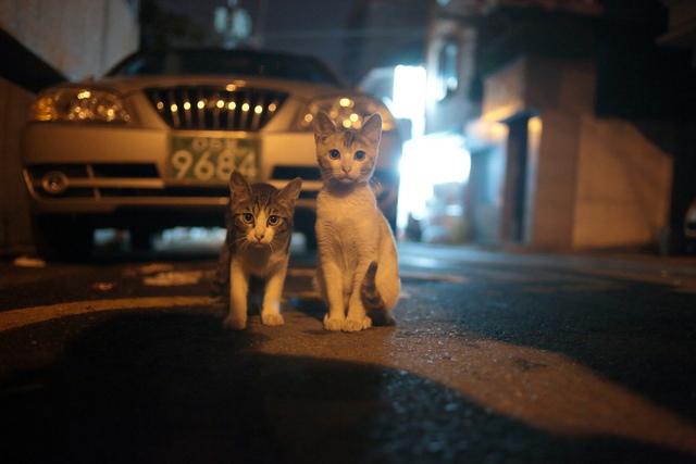 매일 새벽, 같은 자리에서 나를 기다리던 두 마리 고양이는 어디로 갔을까.