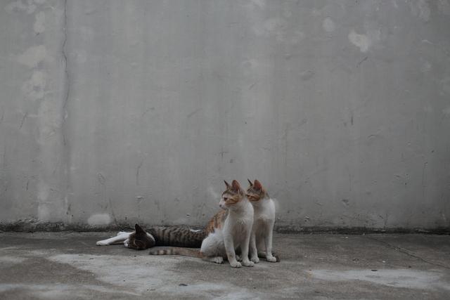 쌍둥이처럼 닮은 삼색이 한 마리가 떠나기 전, 세 마리가 뭉쳐다녔다.