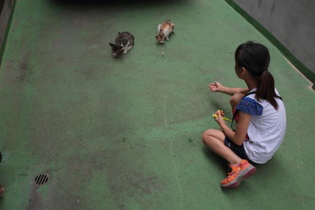 '아깽이' 시절 주민들의 도움으로 밥을 얻어먹으며 지내던 두 마리 고양이.