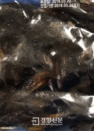 기준치 이상의 패류독소가 검출된 홍합. 우리나라 남해안에서 채취돼 것이다.   해양수산부 제공