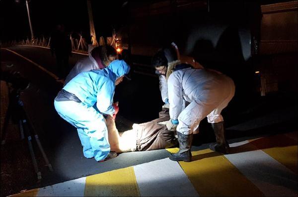 지난 1월 29일, 제주지방경찰청 형사들이 돼지 사체를 제주 애월읍 고내봉 근처 농지 배수로로 옮기고 있다. /제주지방경찰청 제공