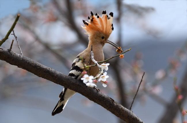 먹이를 물고 둥지 근처 나무에 앉아 주변을 살핀다.