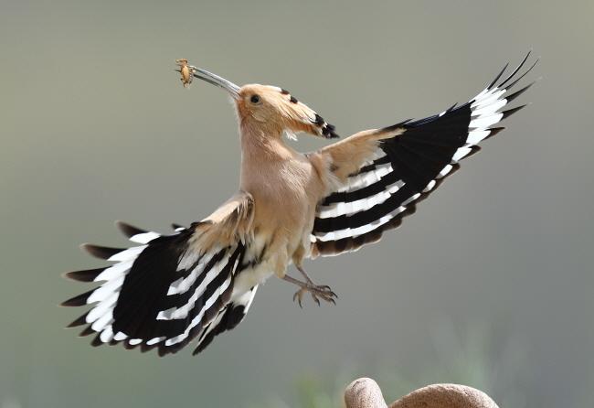 몸보다 큰 날개가 다른 새와 확연하게 다르다.