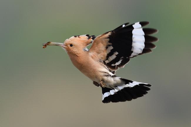 둥지를 향해 일직선으로 날아간다.