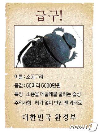 지난해 말 환경부가 복원할 목적으로 소똥구리 50마리를 5000만원에 입찰공고한 포스터. © News1 홍성우 기자