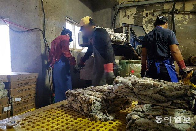 대학생이었던 아흐메드(가명·사진 왼쪽)는 22일 서귀포시의 한 양어장에서 양식 광어에게 줄 냉동사료를 손질하고 있다. 옆에  있는 두 명은 인도네시아에서 온 근로자다. 이들은 난민 심사를 기다리는 동안 생활비를 벌기 위해 일자리를 얻었다. 서귀포=신규진 기자 newjin@donga.com