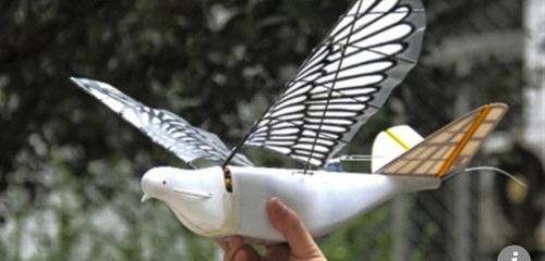 중국이 개발한 비둘기 드론. /SCMP 캡쳐, 연합뉴스