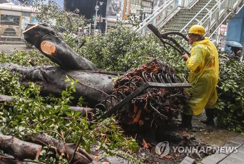 대만 태풍피해…강풍에 뽑혀진 가로수[EPA=연합뉴스]