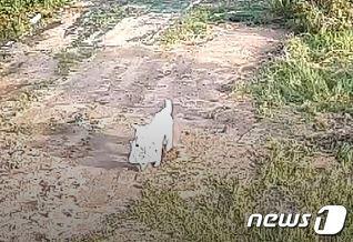 지난달 29일 오전 9시쯤 가방 도난 신고가 접수된 충북 음성군의 한 비닐하우스 농장 인근에서 강아지가 가방을 물고 이동하는 모습이 CCTV에 찍혔다. (충북지방경찰청 제공)© News1