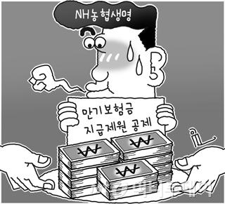 '약관 한줄 차이' 수천억 즉시연금 논란 피해간 농협생명