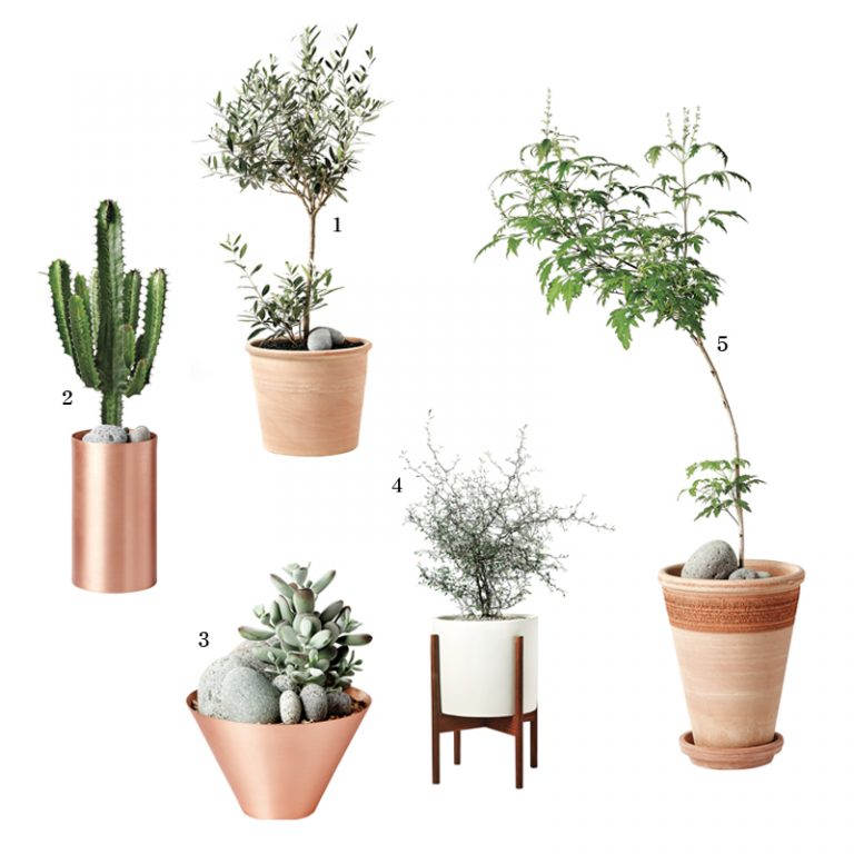 신혼부부에게 추천하는 식물 쇼핑 리스트