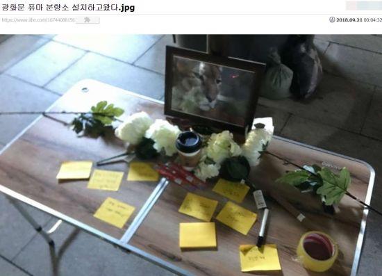 극우 성향 커뮤니티 '일간베스트'의 한 회원이 20일 서울 광화문 광장에 '퓨마 분향소'를 설치 한 뒤 이를 인증한 글을 남겼다. (사진=일간베스트 캡처)