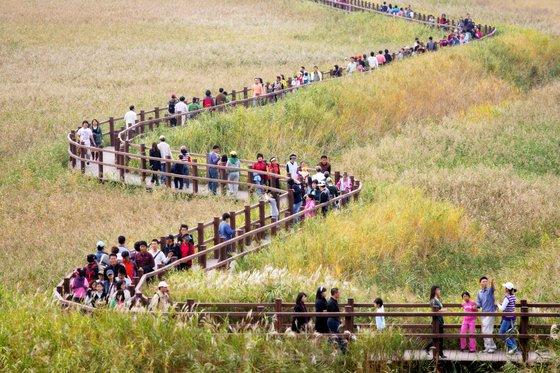 세계 5대 연안습지인 순천만을 대표하는 축제인 '순천만 갈대축제' 모습. [사진 순천시]