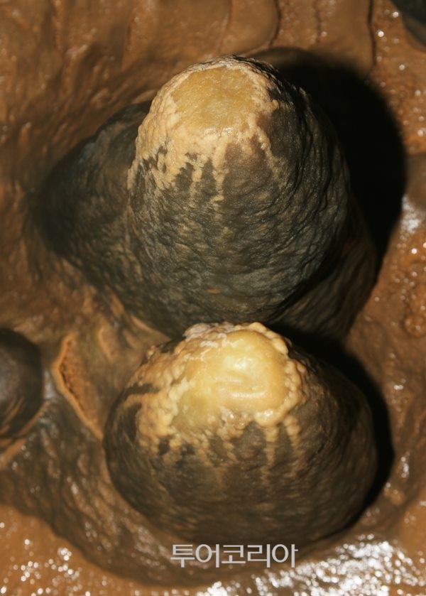 ▲ 온당동굴 석순