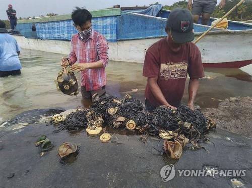 향유고래 뱃속에서 나온 플라스틱 쓰레기 [AP=연합뉴스]