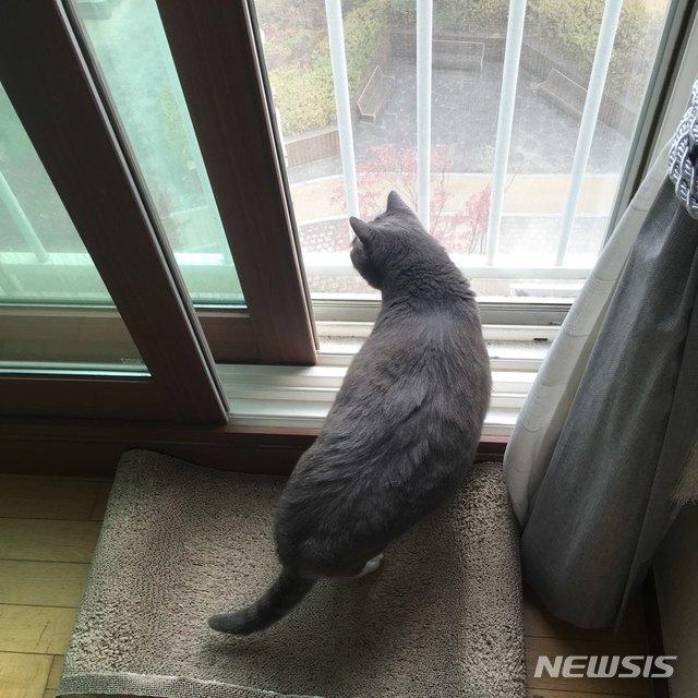 【서울=뉴시스】 김제이 기자 = 고양이는 호기심이 많은 동물로 묘주의 예상을 벗어나는 행동을 하는 경우가 종종 있다. 또한 예민한 성격 탓에 소음에 깜짝 놀라 주인의 품에서 뛰쳐나가는 고양이들도 있다. 2018.11.30 (사진=독자제공)