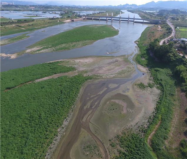 4대강 보 수문을 연 영산강 승촌보 상류에 퇴적물이 쌓인 하중도가 생성됐다.