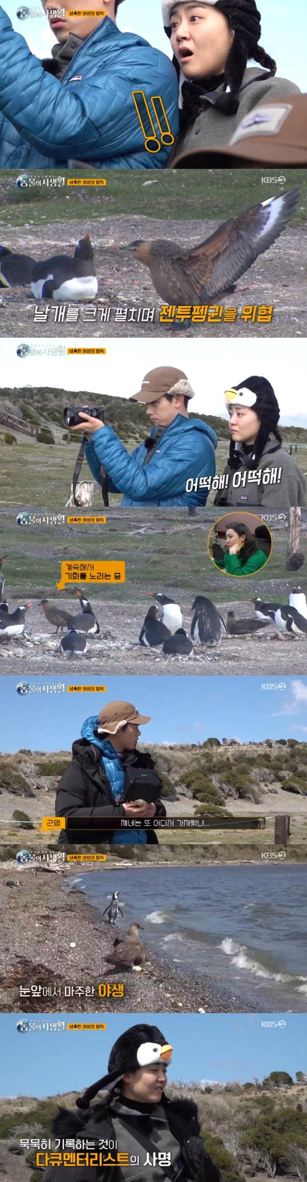 [종합] '동물의 사생활' 문근영X김혜성X에릭남, 냉혹한 자연의 섭리...