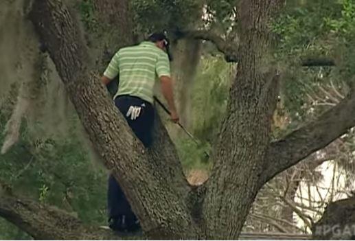 가르시아가 나무 위로 올라가 한 손으로 클럽을 거꾸로 쥐고 샷을 시도하고 있다.