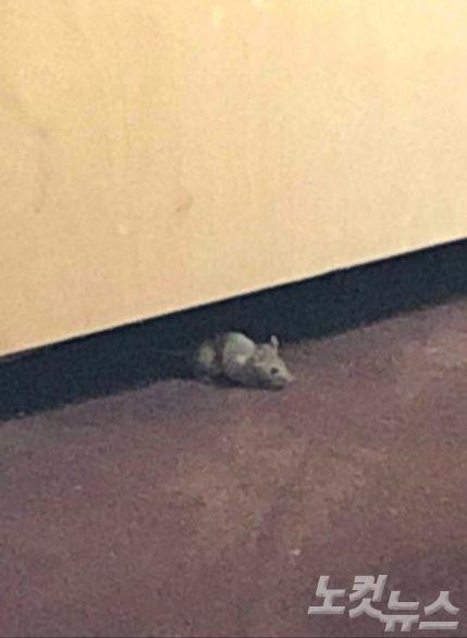 호텔 벽에 난 구멍에서 쥐가 나오고 있다. (사진=제보자 제공)