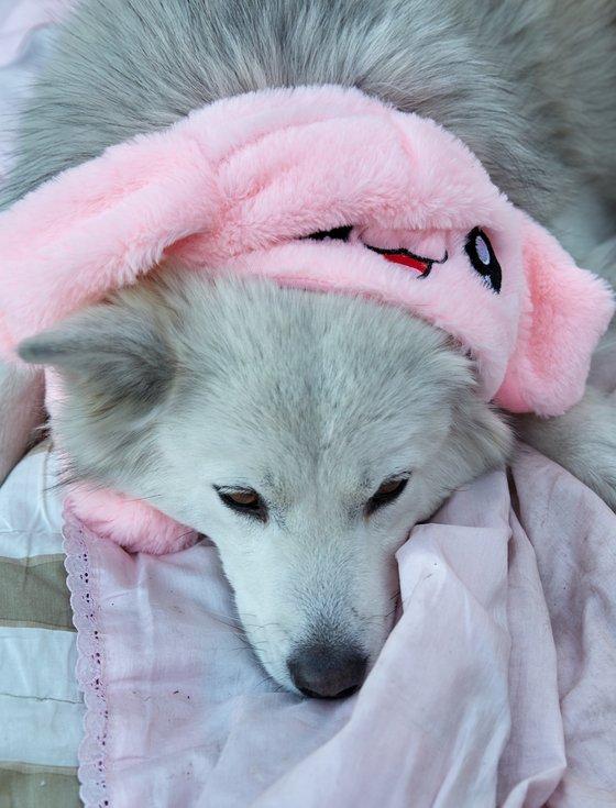여우는 모자를 쓰고 마당에 누워 잠을 청했다.