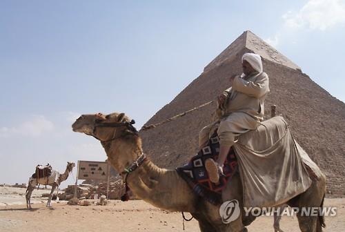 이집트 피라미드 유적지에 있는 낙타들[연합뉴스 자료사진]